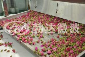 微波玫瑰花烘干设备 金银花干燥机厂家